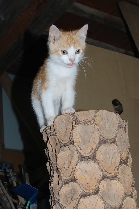 chaton09juilletc