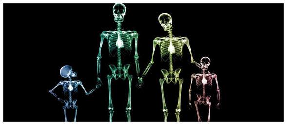 Notre Squelette.