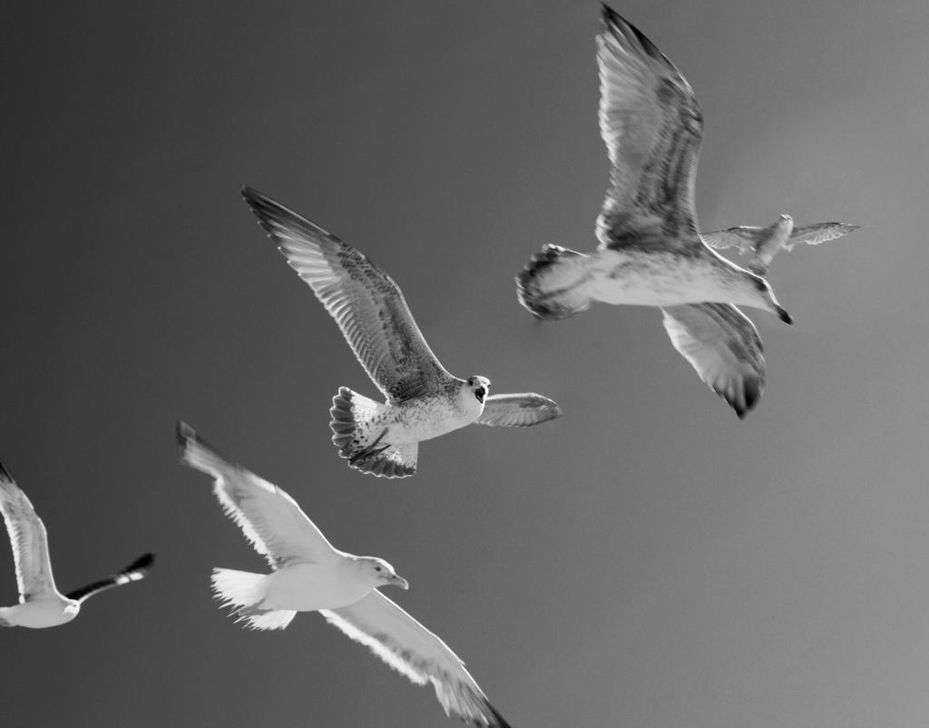 Les goélands de Caparica, 5