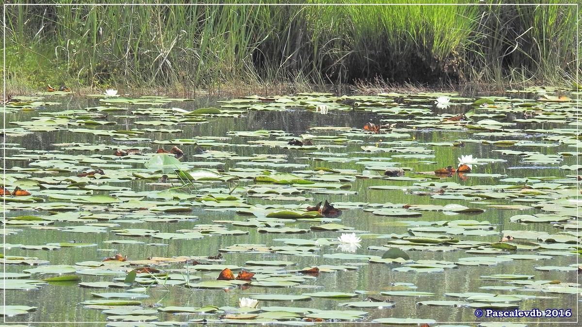 Les lagunes du Gat-Mort - Juillet 2016 - 1/5