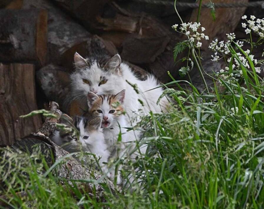 animaux-6-3191_modifie-1.jpg