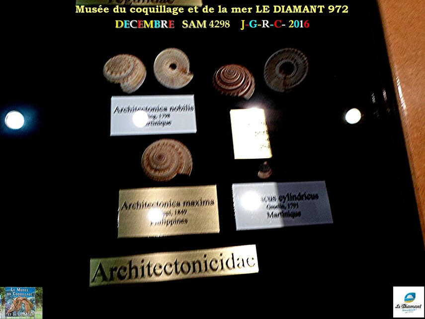 Le monde des coquillages de mer   4/5  24/29    LE DIAMANT MARTINIQUE       D    26/10/2018