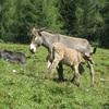 Rencontre insolite dans les Dolomites