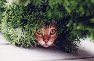 Idée reçue n°1 : les chats retombent toujours sur leurs pattes