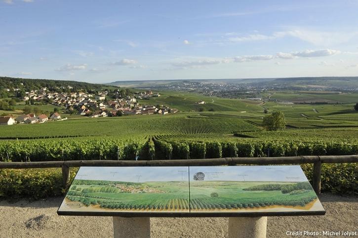 Vignobles près de Chanpillon dans la Marne