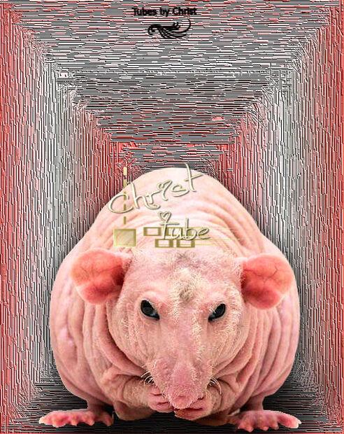 Rat-Nu