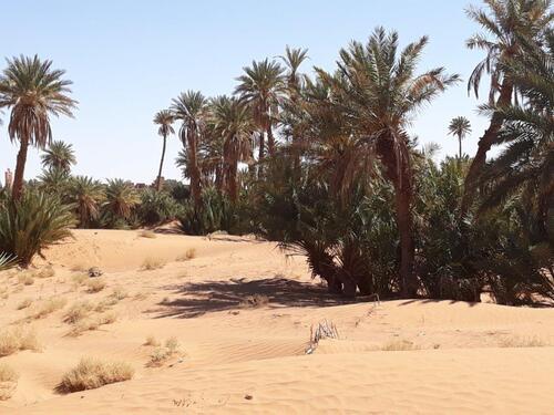 Toujours dans la palmeraie