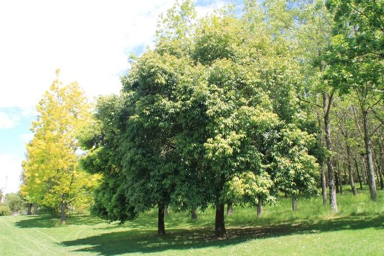 Le Bois Marquis