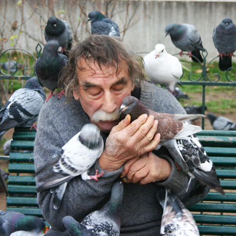 C  P  PIGEONS  et  AUTRES