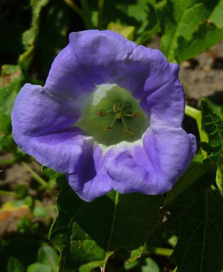 bleu53