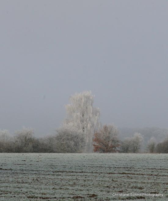 Mon hiver