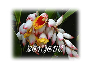 BONJ-PNG.png