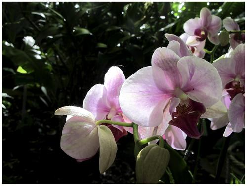 Orchidées 2015