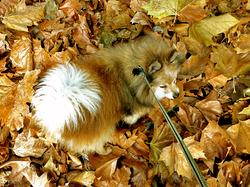 Chroniques des jours d'automne - Chronicles of autumn days