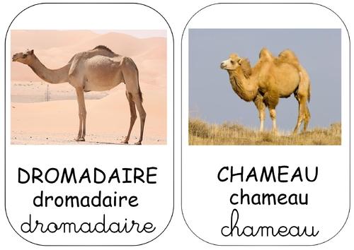 Etiquettes-mots sur le thème des chameaux...