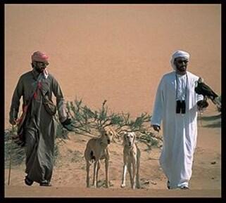 Bédouins et Lévriers