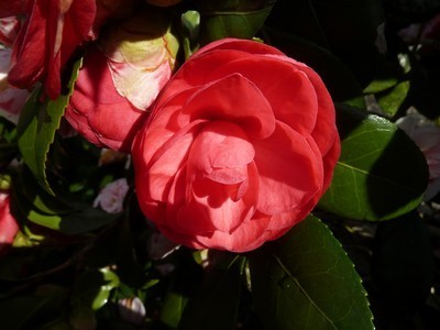 fleurs de mars (6)