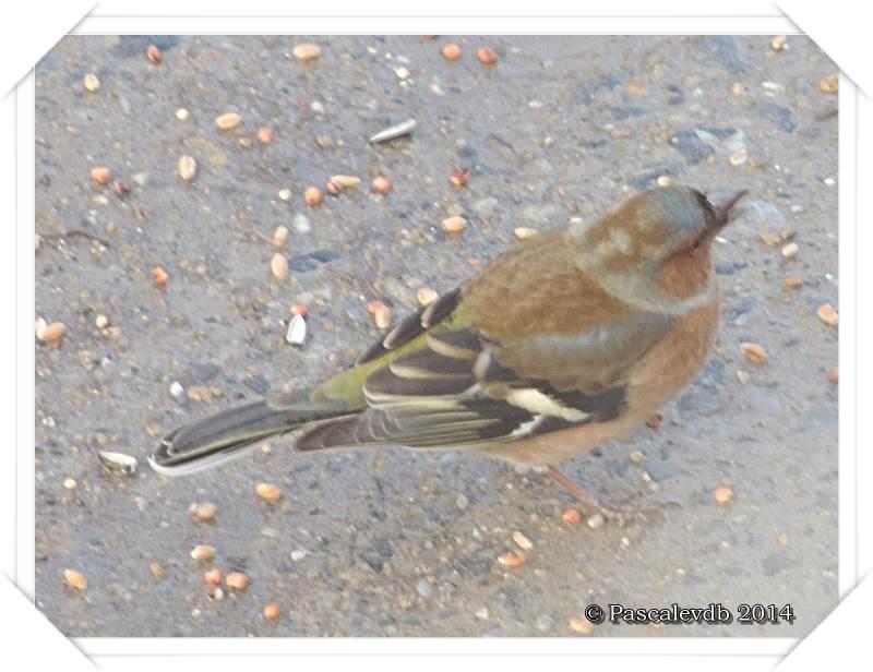 """Les oiseaux de """"mon"""" chemin - 7/9"""