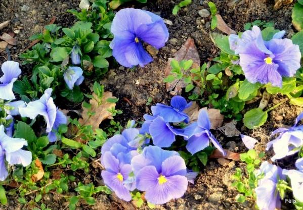 t01 - fleurs