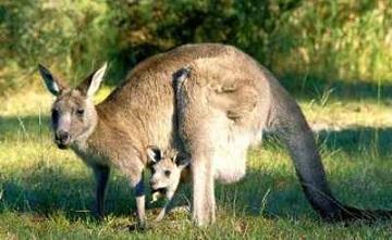 Les animaux imaginaires, devenus réalités ...
