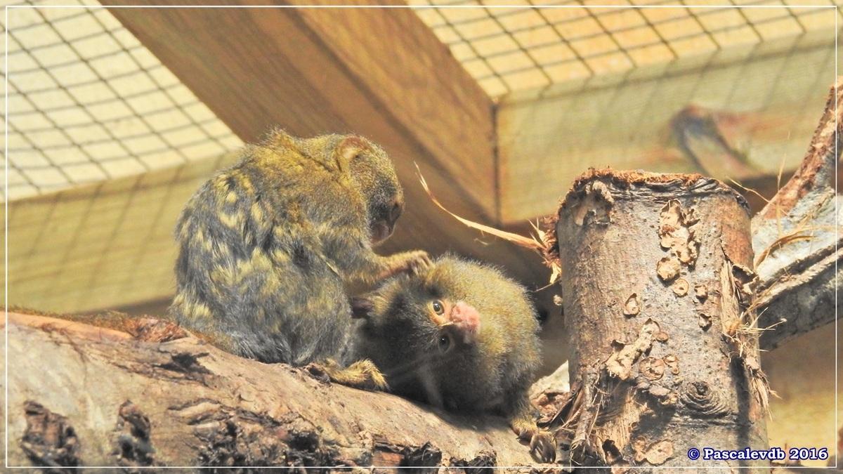 Zoo du Bassin d'Arcachon - Août 2016 - 2/15