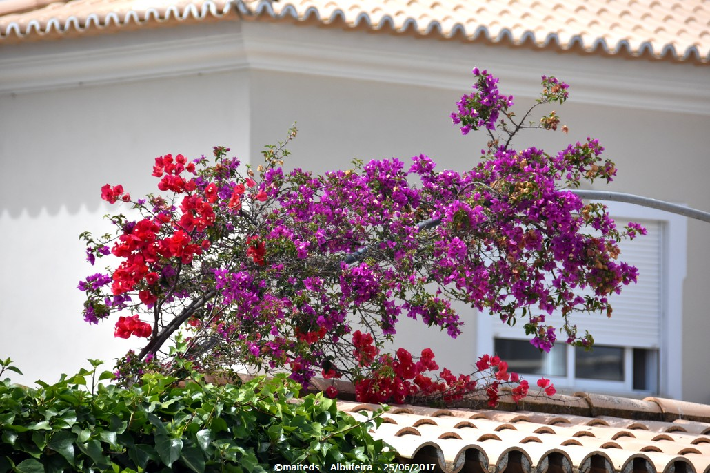 Couleurs de la nature - Albufeira - Portugal 4/4