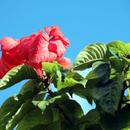 Sur un ciel d'azur - Photo : Renée