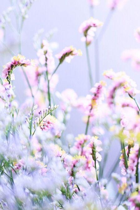 Tubes fonds fleuris