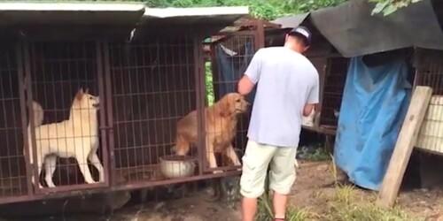 STOP à la maltraitance animale