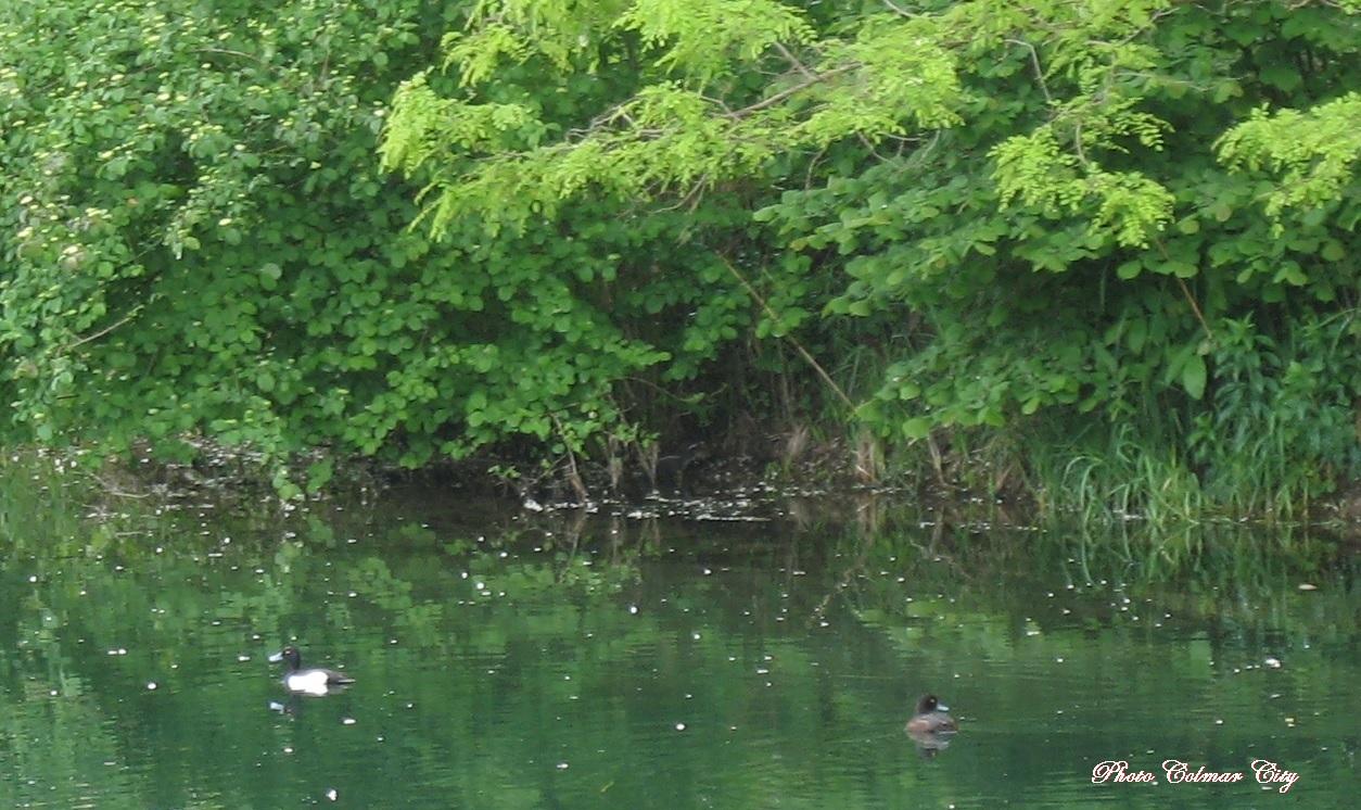 Kunheim : Près du nid