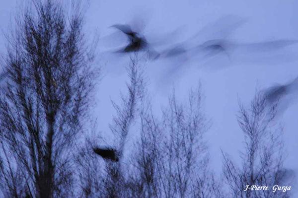 Des vols d'étourneaux photographiés à Châtillon sur Seine par Jean-Pierre Gurga