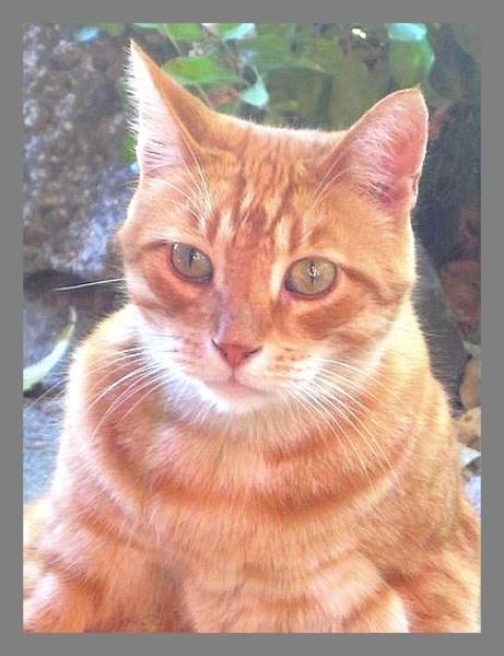 Coup de Coeur : CAT-DIY