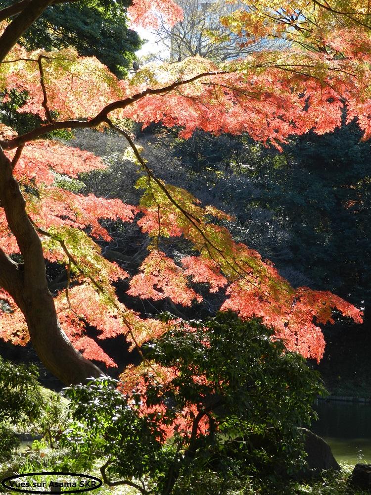 Jardin de Koishikawa Koraku-en a Iidabashi