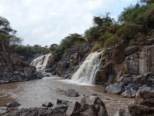 la rivière aux crocodiles dans un parc naturel