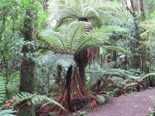 La Nouvelle-Zélande