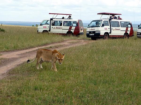 Mini-van lionne