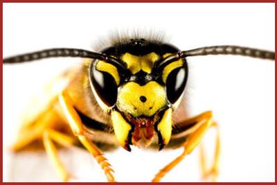 Les insectes  (1)