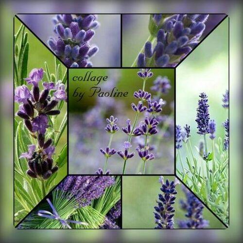 Collages violets