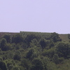 Le vignoble vers Joigny