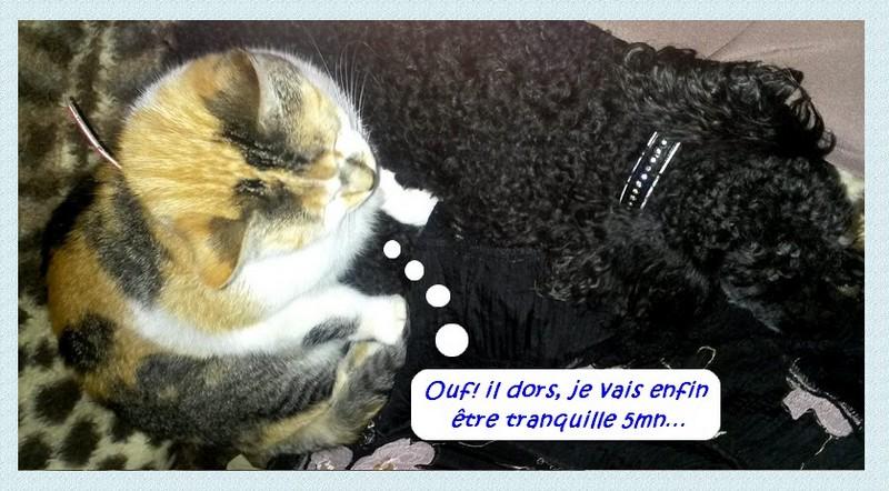 Entre chiens et chats…