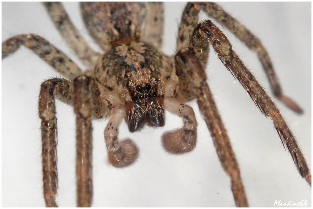 Arachnides-04-7534.JPG