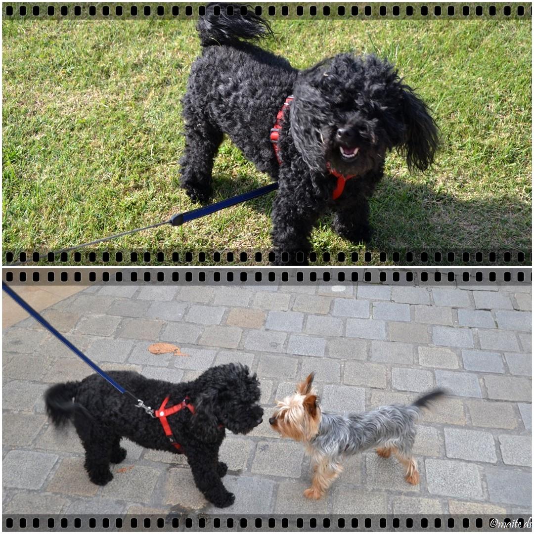 Biwa (chien noir) et un ami de rencontre en Charente-Maritime 2014