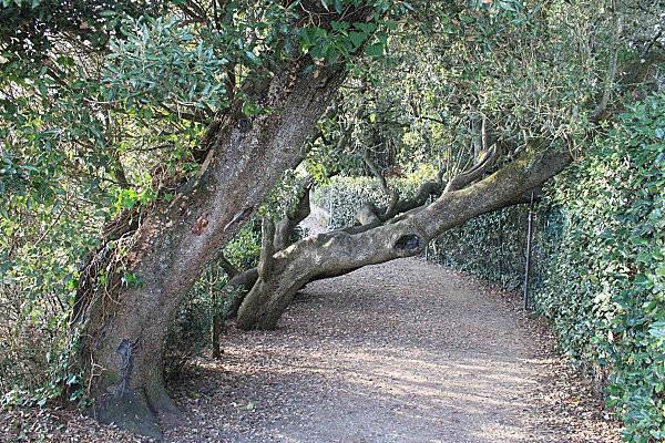 sentier des douaniers 7 les chênes verts