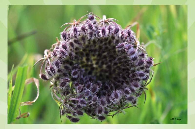 coeur-fleur-cancer-8380.jpg