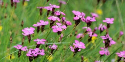 Les fleurs sauvages,
