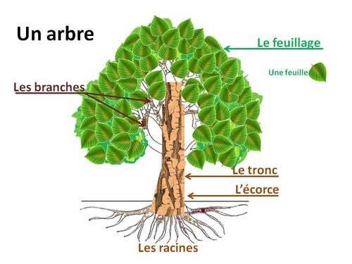 Vocabulaire : Vocanet - Arbre