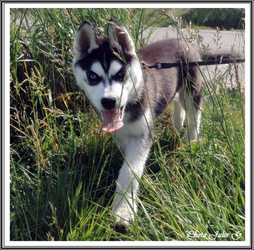 Taïka (3 mois)