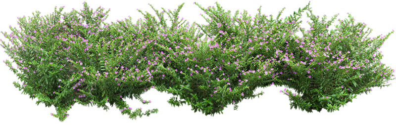 Flowers in the Garden 55.png