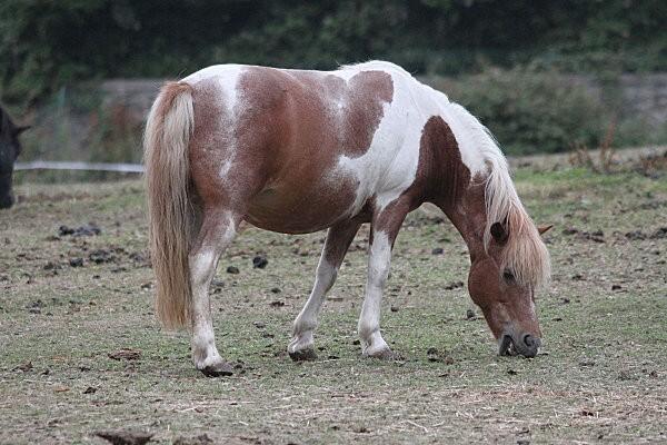 chevaux à dinard5