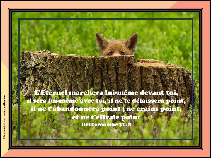 Ne crains point - Deutéronome 31 : 8